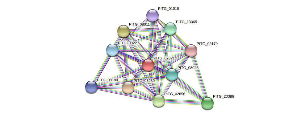 PITG_07821 protein (Phytophthora infestans) - STRING interaction network