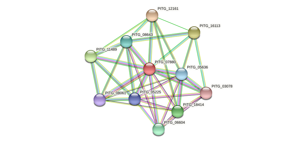 PITG_07880 protein (Phytophthora infestans) - STRING interaction network