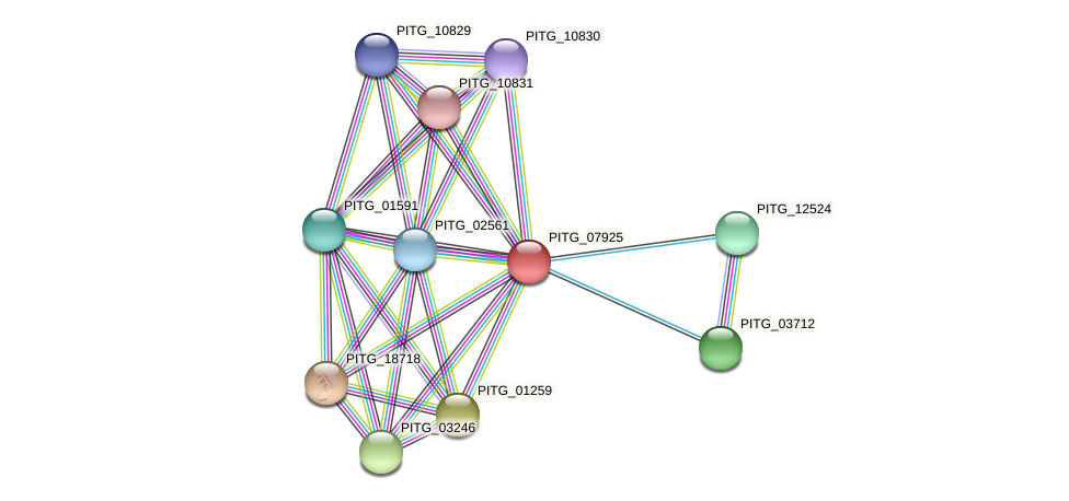 PITG_07925 protein (Phytophthora infestans) - STRING interaction network