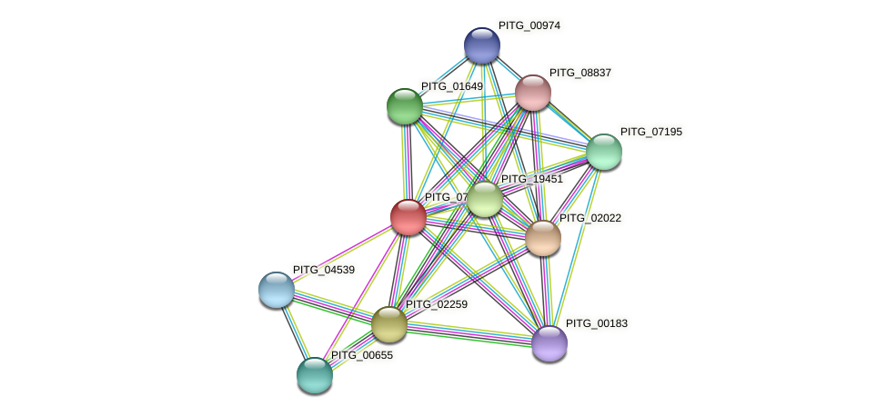 PITG_07971 protein (Phytophthora infestans) - STRING interaction network