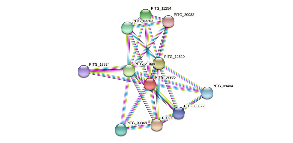 PITG_07985 protein (Phytophthora infestans) - STRING interaction network