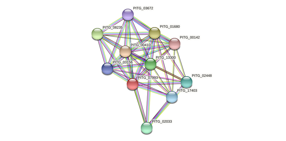 PITG_07993 protein (Phytophthora infestans) - STRING interaction network
