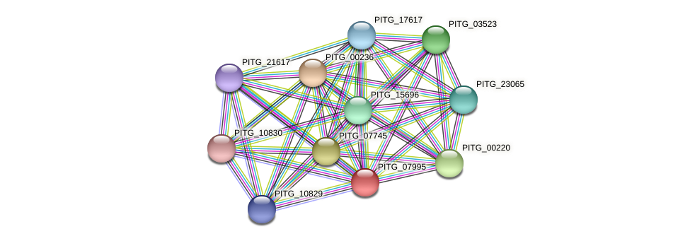 PITG_07995 protein (Phytophthora infestans) - STRING interaction network