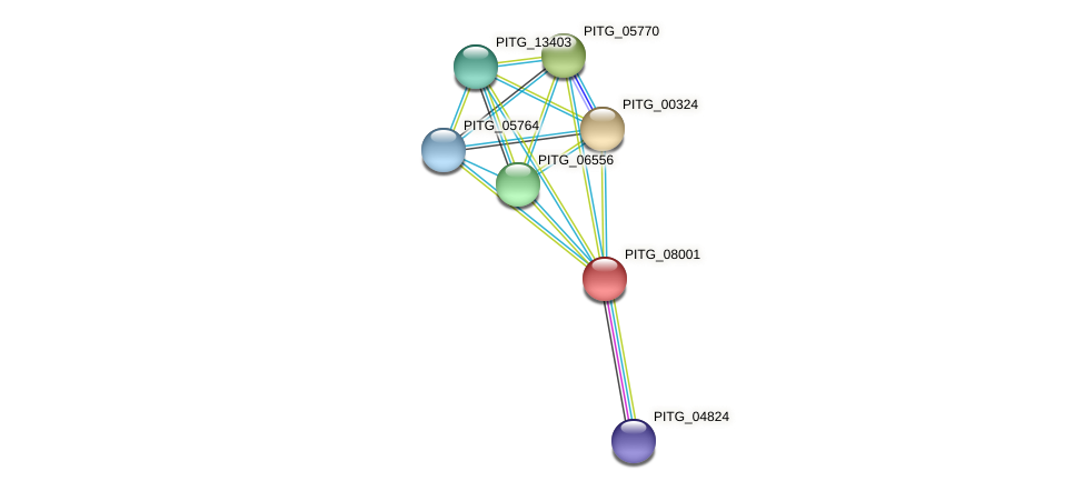 PITG_08001 protein (Phytophthora infestans) - STRING interaction network