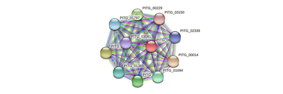 PITG_08014 protein (Phytophthora infestans) - STRING interaction network