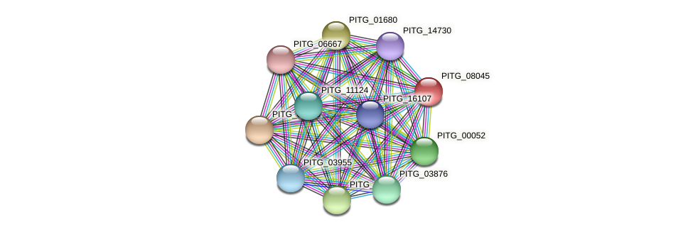 PITG_08045 protein (Phytophthora infestans) - STRING interaction network