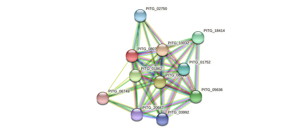 PITG_08073 protein (Phytophthora infestans) - STRING interaction network