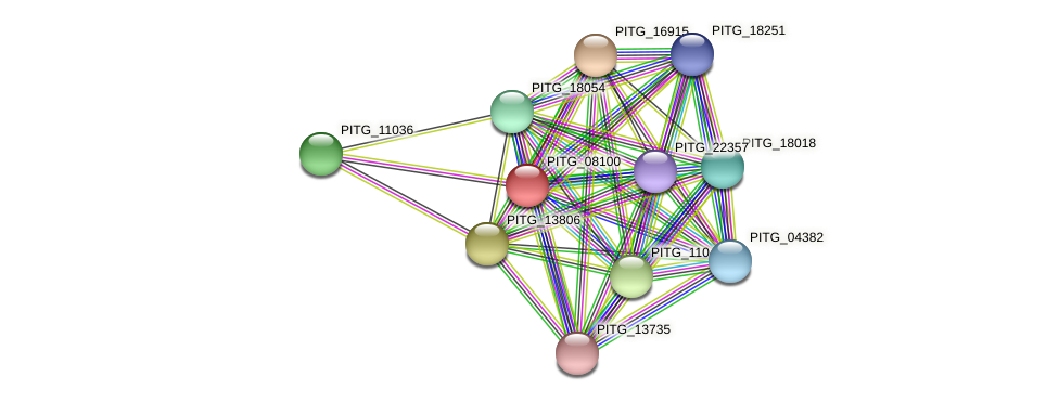 PITG_08100 protein (Phytophthora infestans) - STRING interaction network
