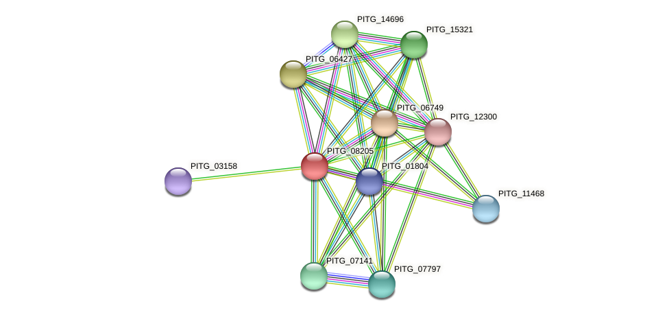 PITG_08205 protein (Phytophthora infestans) - STRING interaction network