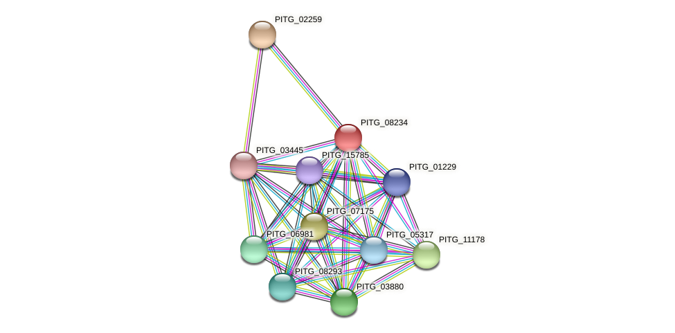 PITG_08234 protein (Phytophthora infestans) - STRING interaction network