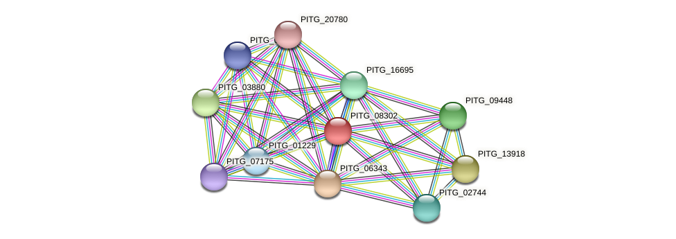PITG_08302 protein (Phytophthora infestans) - STRING interaction network