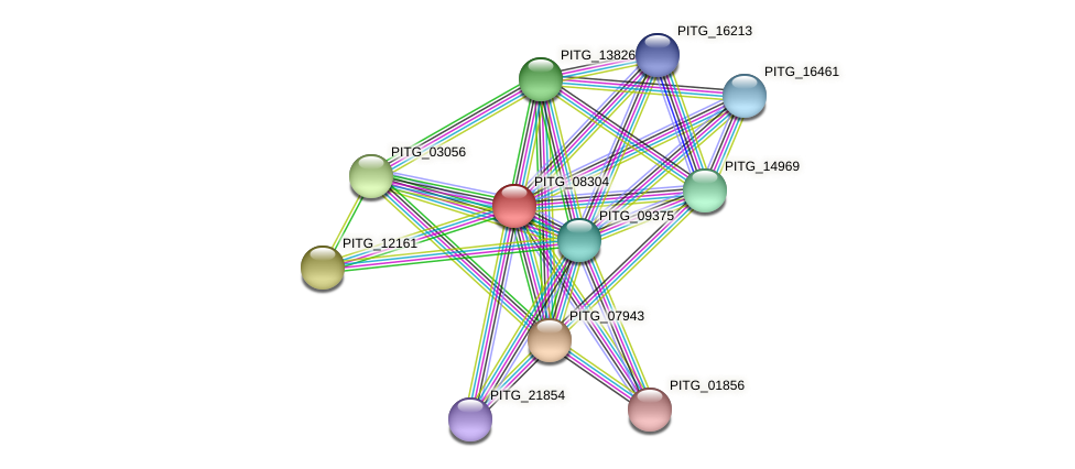 PITG_08304 protein (Phytophthora infestans) - STRING interaction network