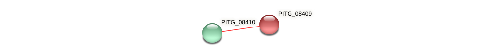 PITG_08409 protein (Phytophthora infestans) - STRING interaction network