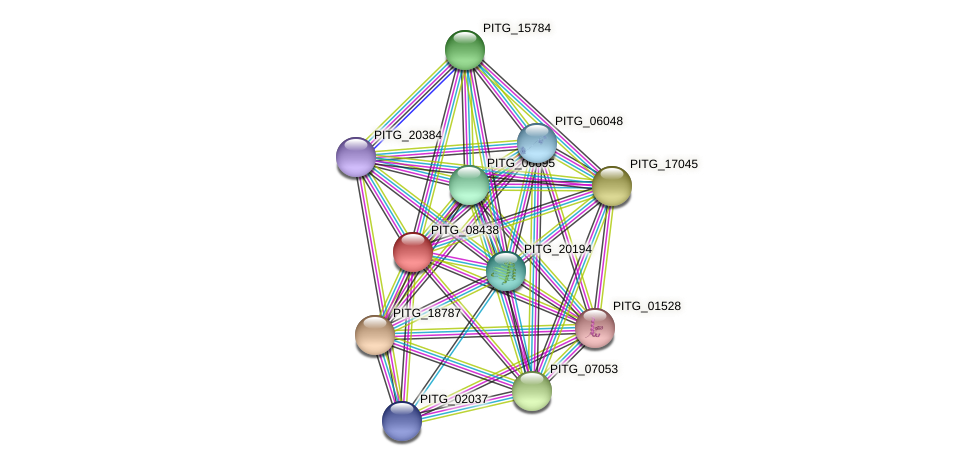 PITG_08438 protein (Phytophthora infestans) - STRING interaction network