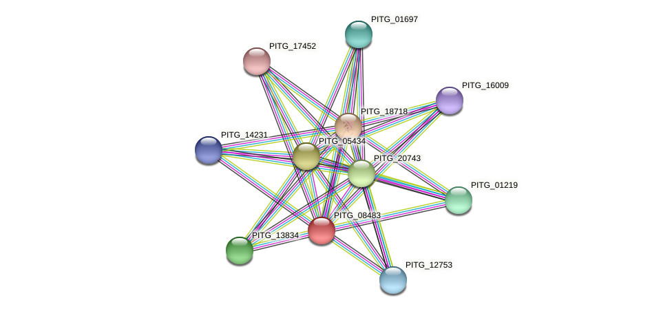 PITG_08483 protein (Phytophthora infestans) - STRING interaction network
