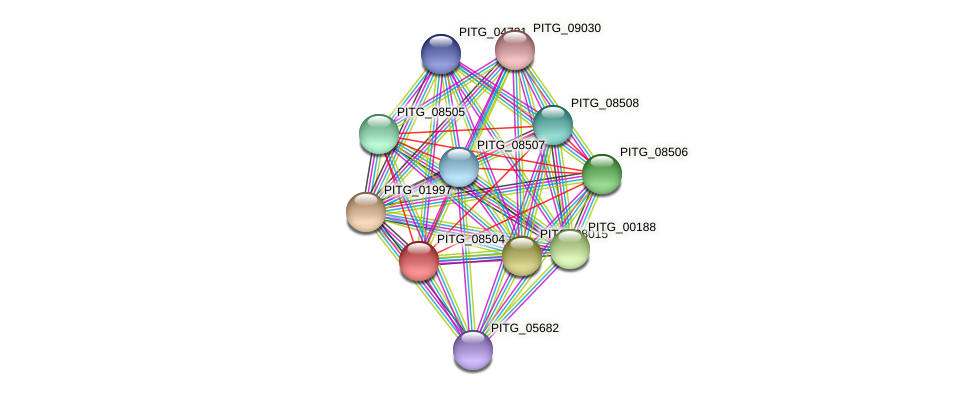 PITG_08504 protein (Phytophthora infestans) - STRING interaction network