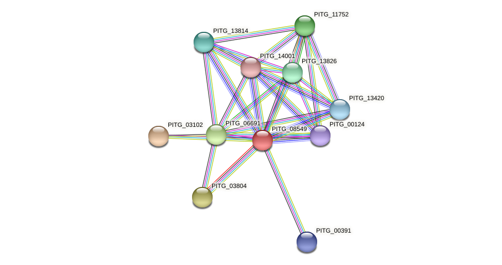 PITG_08549 protein (Phytophthora infestans) - STRING interaction network
