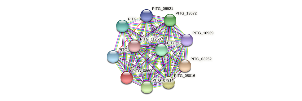 PITG_08600 protein (Phytophthora infestans) - STRING interaction network