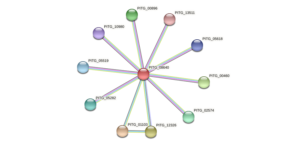 PITG_08640 protein (Phytophthora infestans) - STRING interaction network