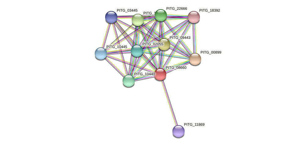 PITG_08660 protein (Phytophthora infestans) - STRING interaction network