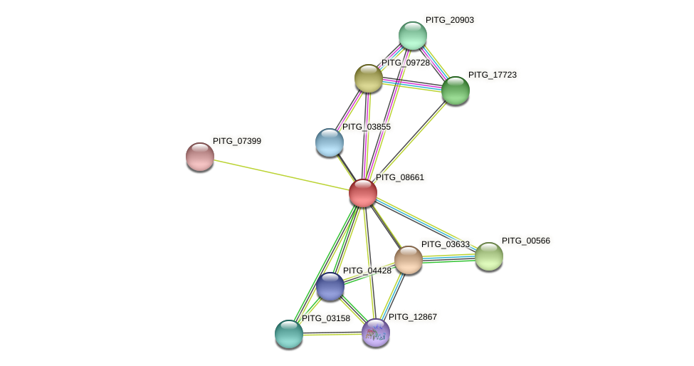PITG_08661 protein (Phytophthora infestans) - STRING interaction network