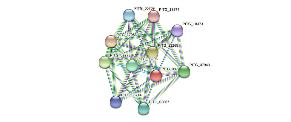 PITG_08702 protein (Phytophthora infestans) - STRING interaction network