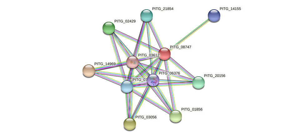 PITG_08747 protein (Phytophthora infestans) - STRING interaction network