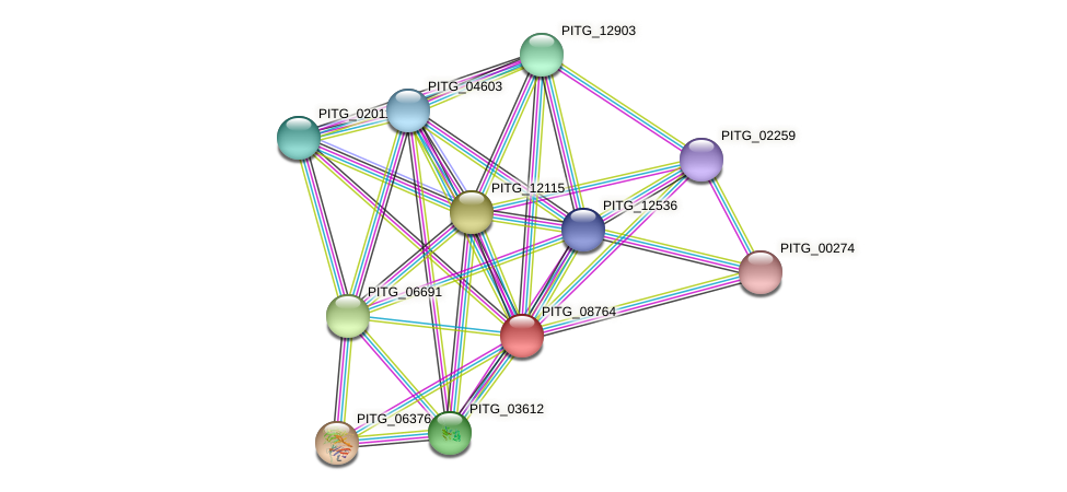 PITG_08764 protein (Phytophthora infestans) - STRING interaction network