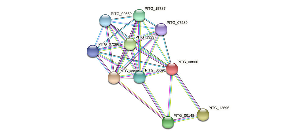 PITG_08806 protein (Phytophthora infestans) - STRING interaction network