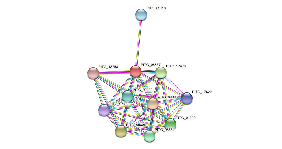 PITG_08837 protein (Phytophthora infestans) - STRING interaction network
