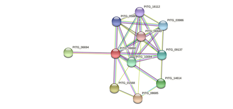 PITG_08880 protein (Phytophthora infestans) - STRING interaction network