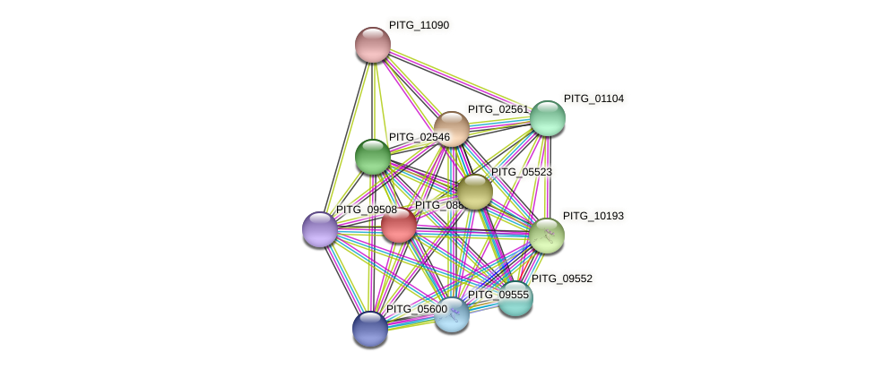 PITG_08883 protein (Phytophthora infestans) - STRING interaction network
