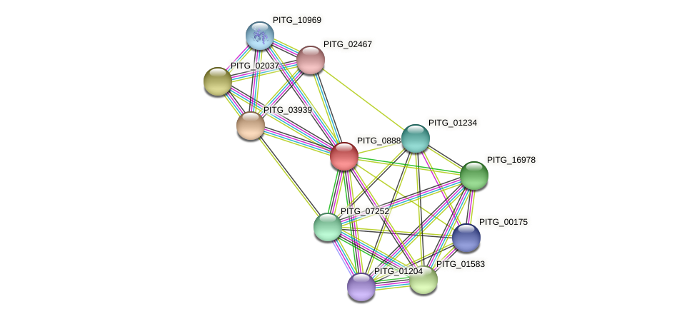 PITG_08886 protein (Phytophthora infestans) - STRING interaction network