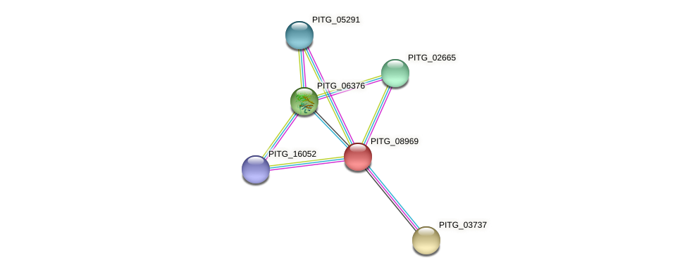 PITG_08969 protein (Phytophthora infestans) - STRING interaction network