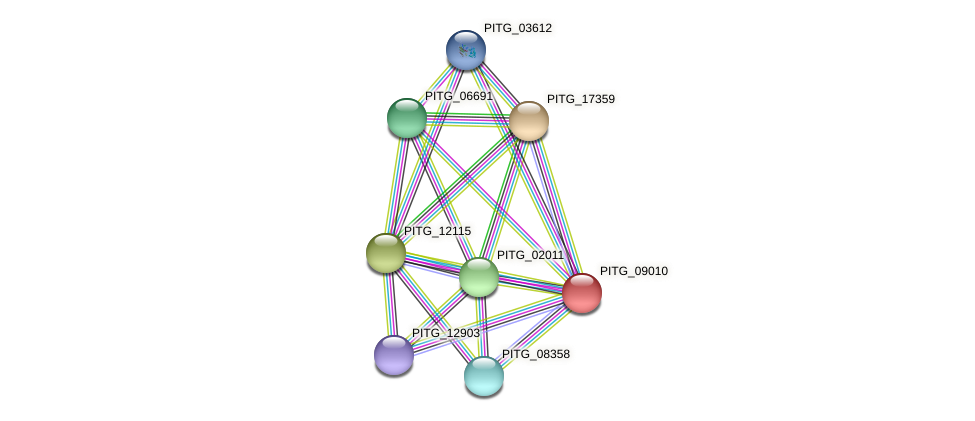 PITG_09010 protein (Phytophthora infestans) - STRING interaction network