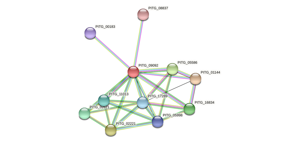 PITG_09092 protein (Phytophthora infestans) - STRING interaction network