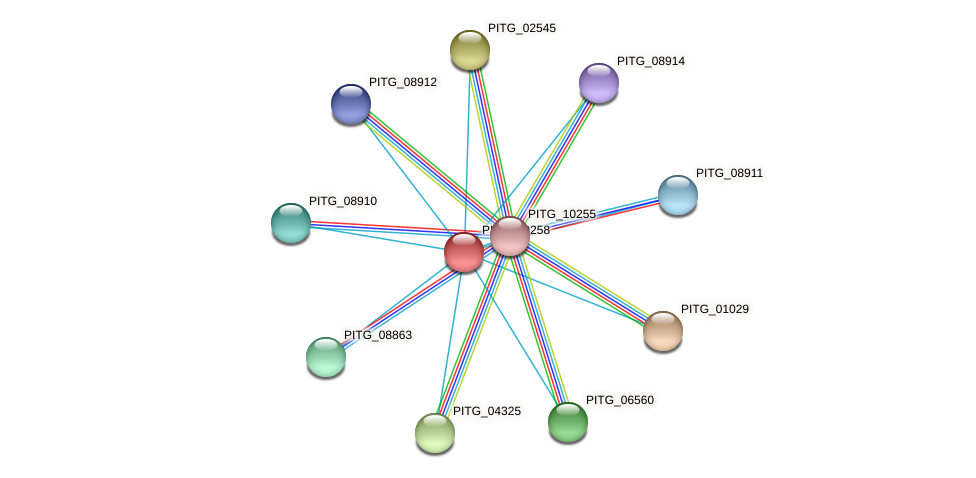PITG_09258 protein (Phytophthora infestans) - STRING interaction network