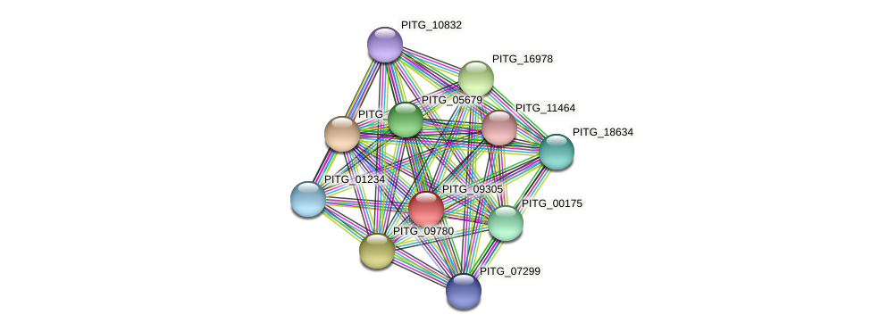 PITG_09305 protein (Phytophthora infestans) - STRING interaction network