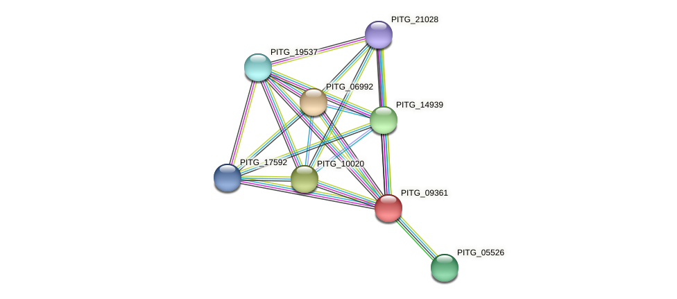 PITG_09361 protein (Phytophthora infestans) - STRING interaction network