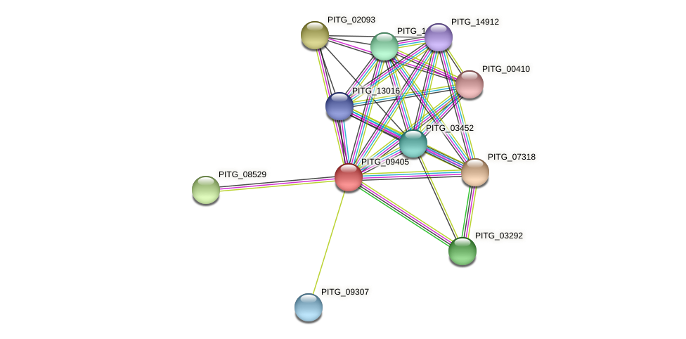 PITG_09405 protein (Phytophthora infestans) - STRING interaction network