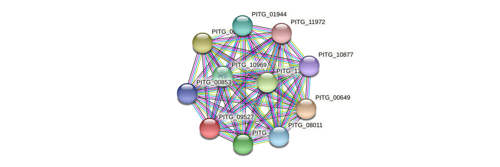 PITG_09527 protein (Phytophthora infestans) - STRING interaction network