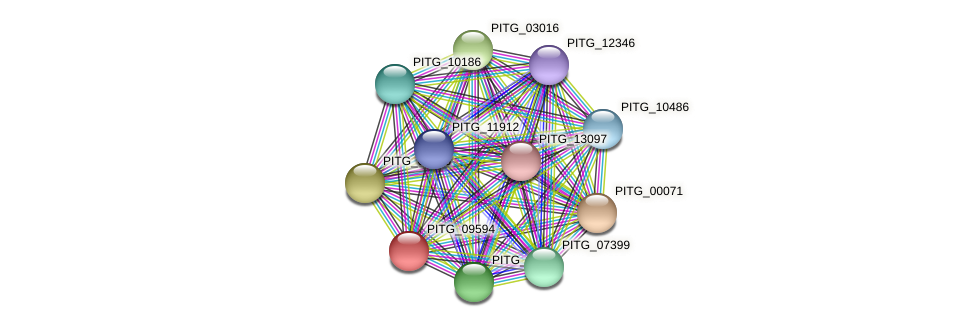 PITG_09594 protein (Phytophthora infestans) - STRING interaction network