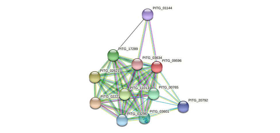 PITG_09596 protein (Phytophthora infestans) - STRING interaction network