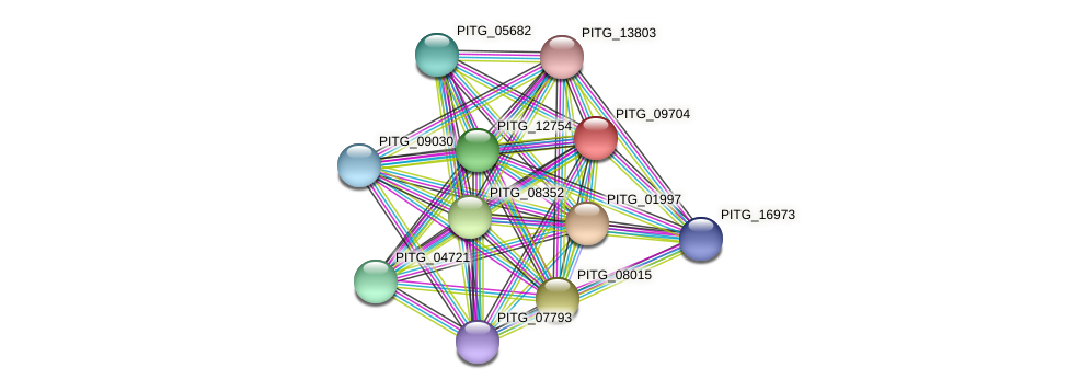 PITG_09704 protein (Phytophthora infestans) - STRING interaction network