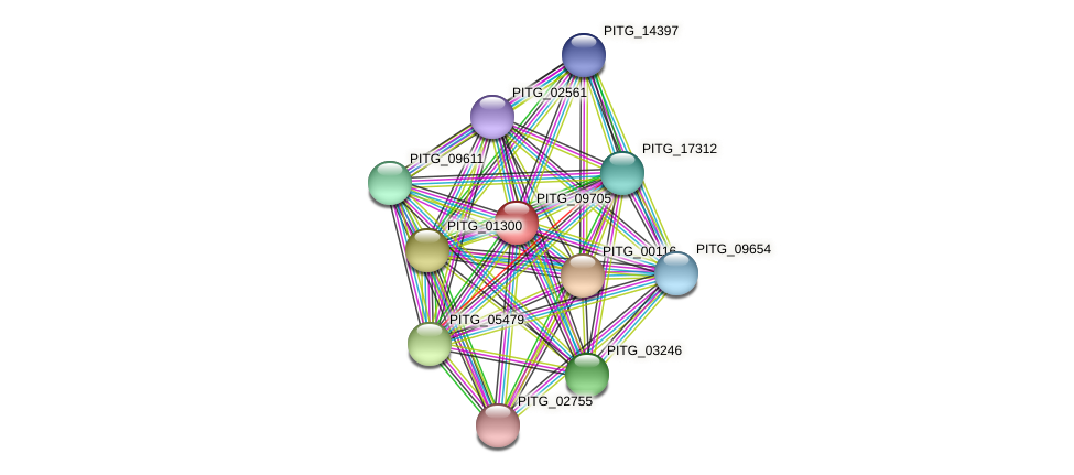 PITG_09705 protein (Phytophthora infestans) - STRING interaction network