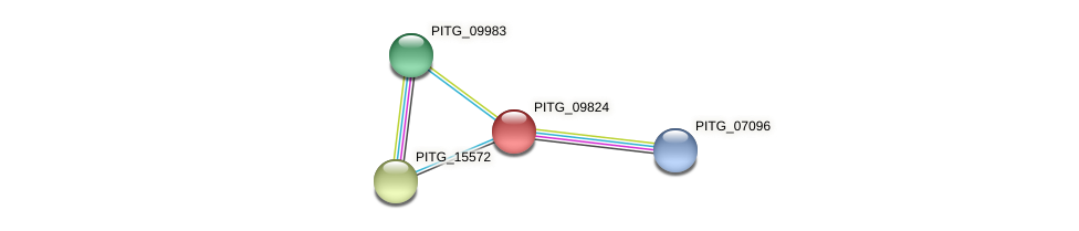 PITG_09824 protein (Phytophthora infestans) - STRING interaction network