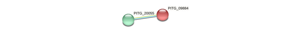 PITG_09884 protein (Phytophthora infestans) - STRING interaction network