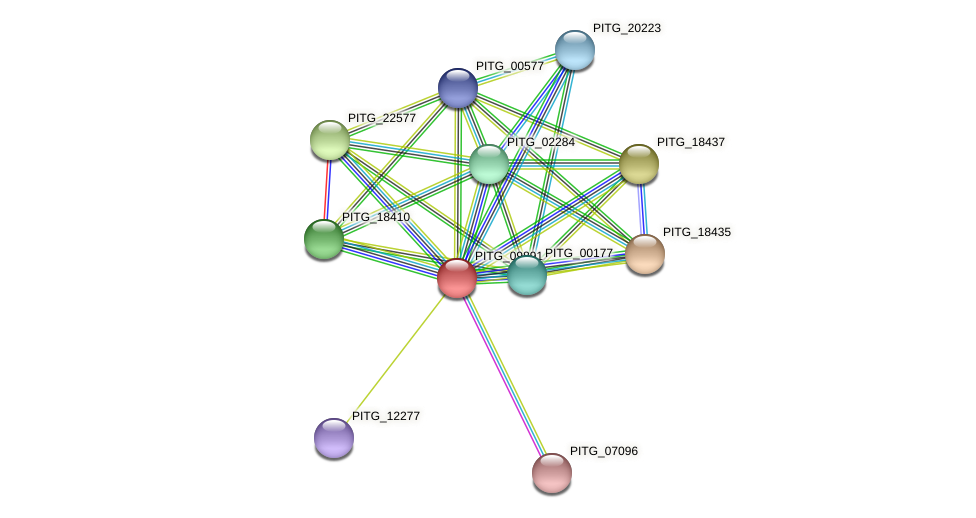 PITG_09891 protein (Phytophthora infestans) - STRING interaction network