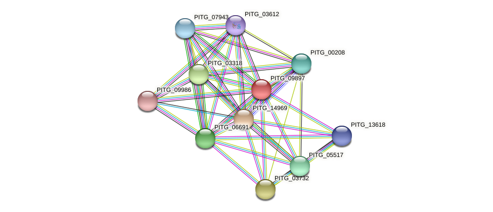 PITG_09897 protein (Phytophthora infestans) - STRING interaction network