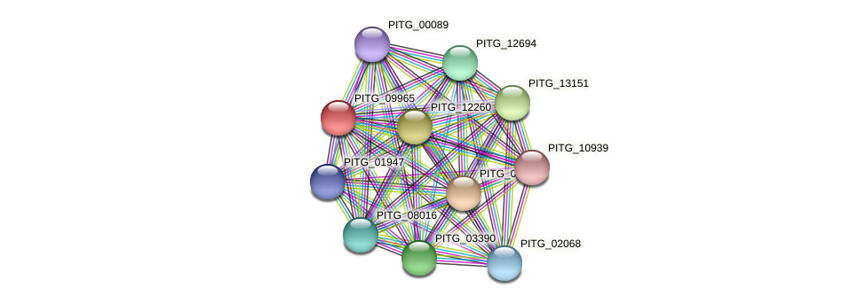 PITG_09965 protein (Phytophthora infestans) - STRING interaction network